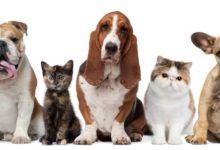 Pet Carers