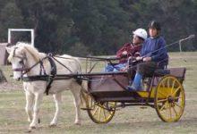 Carriage Driving Volunteer